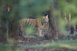 kanha_national_park